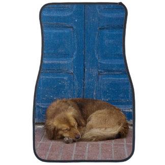 Chien de sommeil, Essaouira, Maroc Tapis De Sol