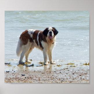 Chien de St Bernard à l affiche de plage copie c