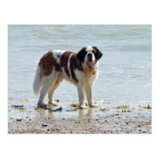 Chien de St Bernard à la carte postale de plage