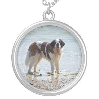 Chien de St Bernard au collier de plage idée de c