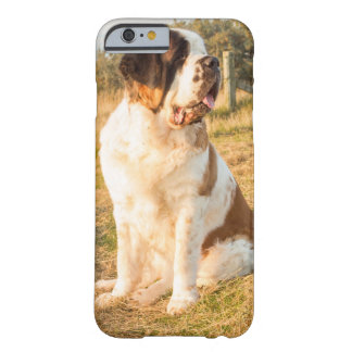 Chien de St Bernard Coque iPhone 6 Barely There