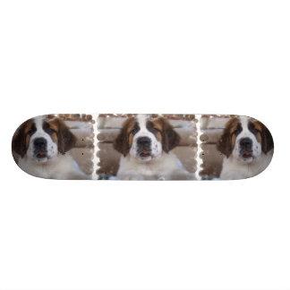 Chien de St Bernard sur la planche à roulettes Skateboards Cutomisables