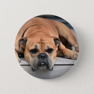 Chien de Taureau Badge