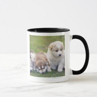 Chien de traîneau sibérien ; Une race de chien Mug