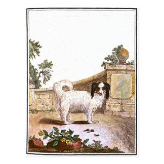 Chien - épagneul cartes postales