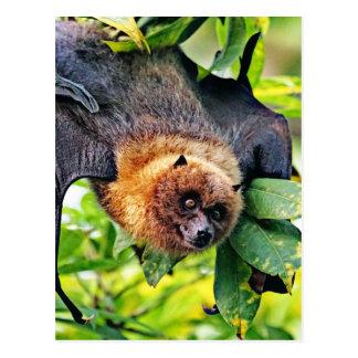 chien extraordinaire de vol - chauve-souris carte postale