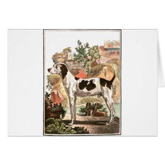 Chien - fox-hound cartes de vœux
