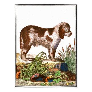 Chien - Français Waterdog Carte Postale