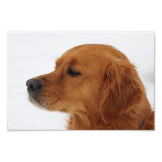 chien impressions photo