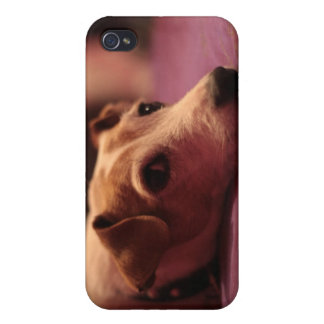 Chien (Jack Russell) Coque iPhone 4 Et 4S