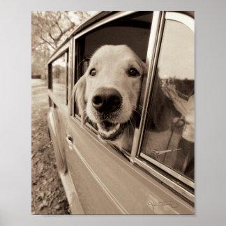 Chien jetant un coup d'oeil une fenêtre de voiture posters