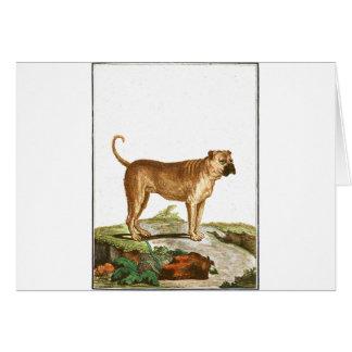 Chien - mastiff carte de vœux
