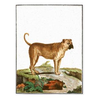 Chien - mastiff cartes postales