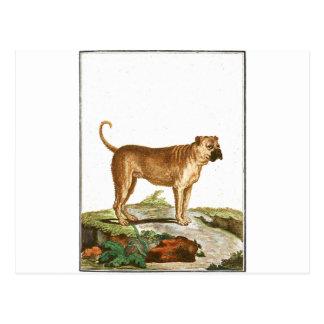 Chien - mastiff carte postale