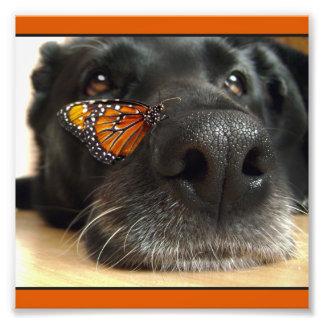 Chien noir de laboratoire avec le papillon impressions photo