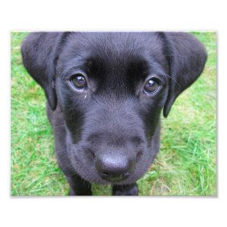Chien noir de Labrador sur l'herbe Impression Photo