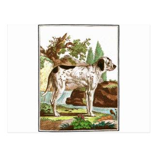 Chien - pointage du chien carte postale