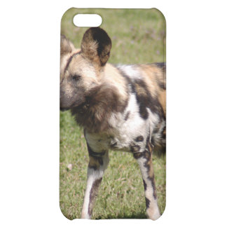 Chien sauvage africain i
