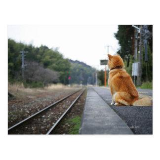 Chien se reposant sur la station de train carte postale