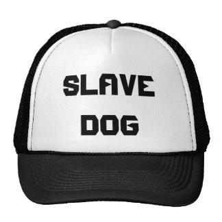 CHIEN SLAVE CASQUETTES