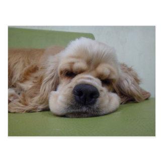Chien somnolent carte postale
