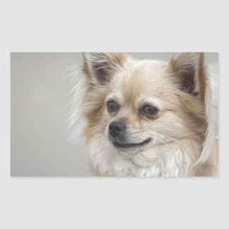chien sticker rectangulaire
