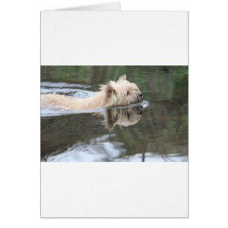 chien swmming carte de vœux