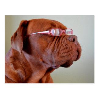 Chien utilisant les lunettes roses carte postale