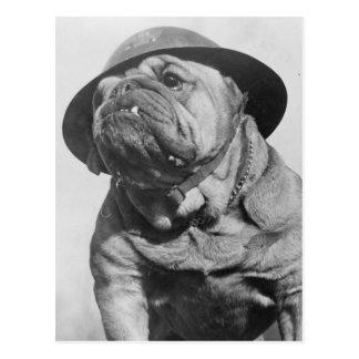 """Résultat de recherche d'images pour """"chien avec un casque militaire"""""""