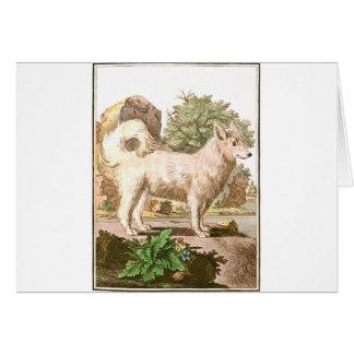 Chien - Wolfdog Carte De Vœux