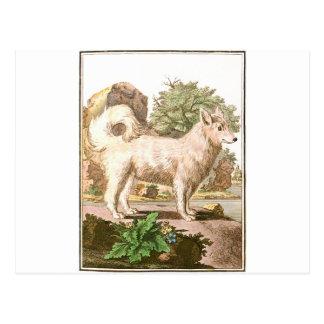 Chien - Wolfdog Carte Postale