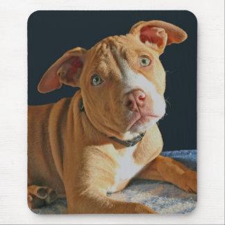 Chienchien triste Mousepad de chien de pitbull de Tapis De Souris