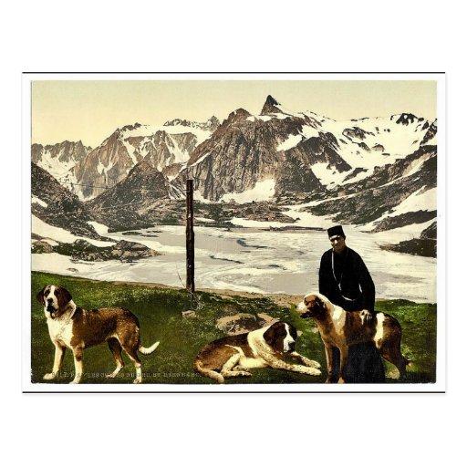 Chiens de St Bernard, Valais, Alpes de, cla de la  Carte Postale