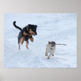 Chiens jouant dans la neige posters