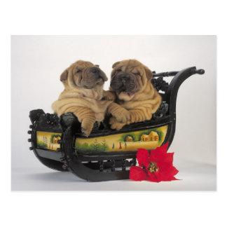 chiens shar somnolents de pei dans le traîneau de carte postale