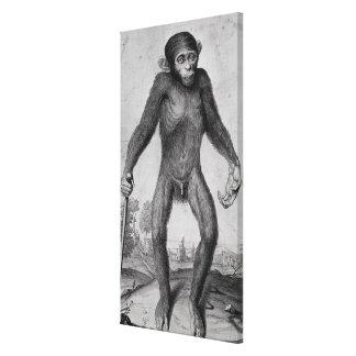Chimpanzé, 1699 toiles