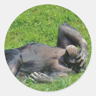 Chimpanzé - autocollant
