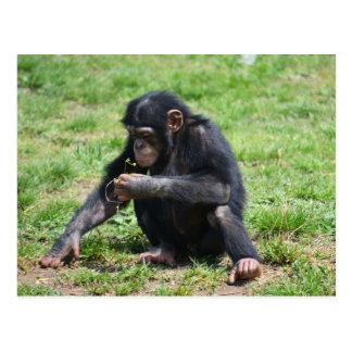 Chimpanzé avec la carte postale de fleur