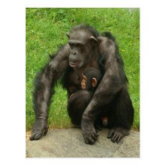 Chimpanzé avec un bébé - carte postale