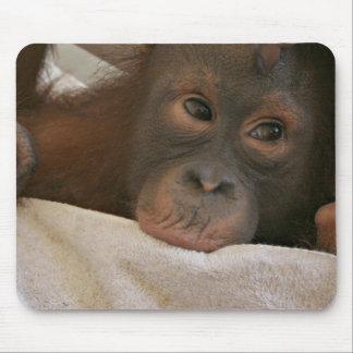 Chimpanzé Mousepad de bébé Tapis De Souris