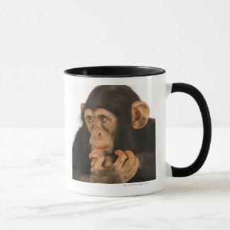 Chimpanzé (troglodytes de casserole). Jeune Tasse