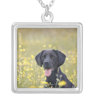 Chiot 16 mois 2 collier