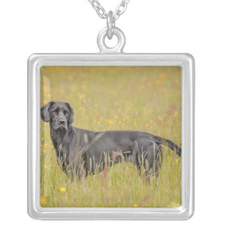 Chiot 16 mois collier