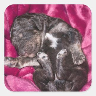 Chiot adorable de caniche de sommeil sticker carré