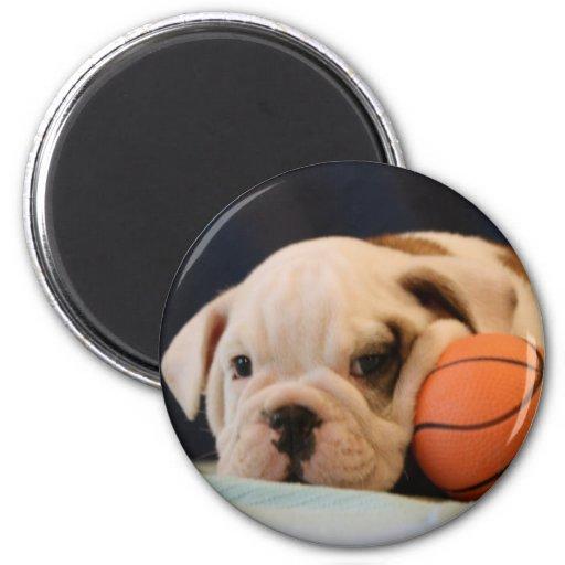 Chiot anglais de bouledogue avec le basket-ball ro aimant pour réfrigérateur