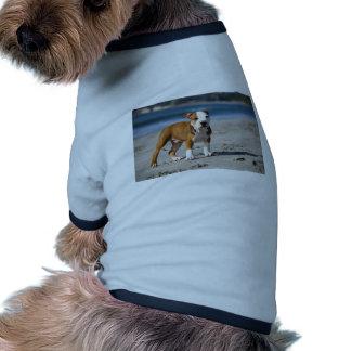 chiot anglais de bouledogue sur la plage t-shirt ringer pour chien
