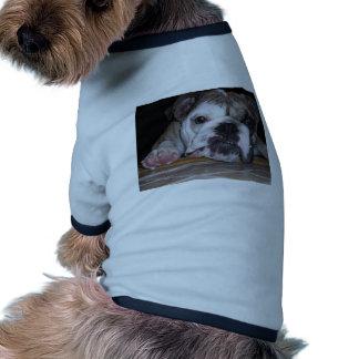 Chiot anglais de bouledogue manteaux pour animaux domestiques