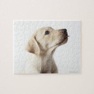 Chiot blond de Labrador collant la langue Puzzle