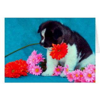 Chiot d'Akita avec des fleurs Carte De Vœux