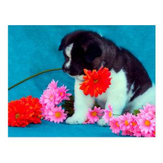 Chiot d'Akita avec des fleurs Carte Postale